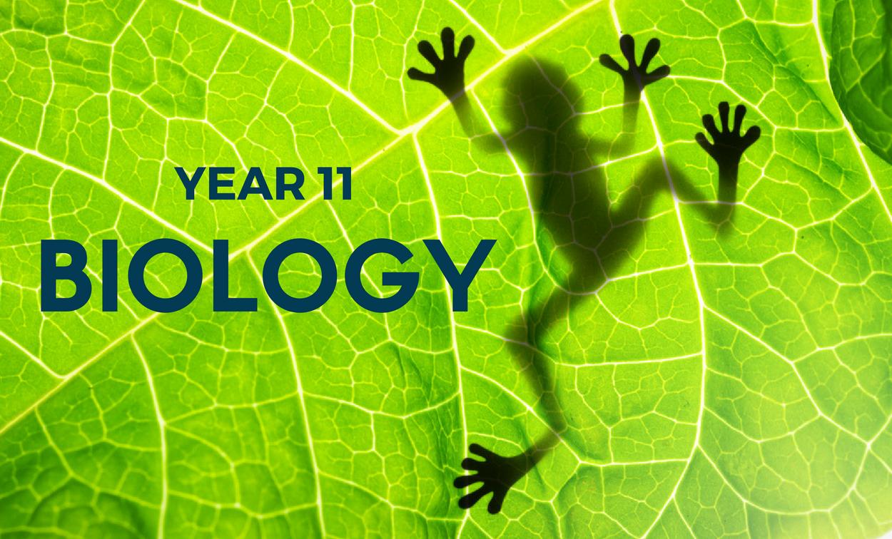adelaide year 11 biology tutor